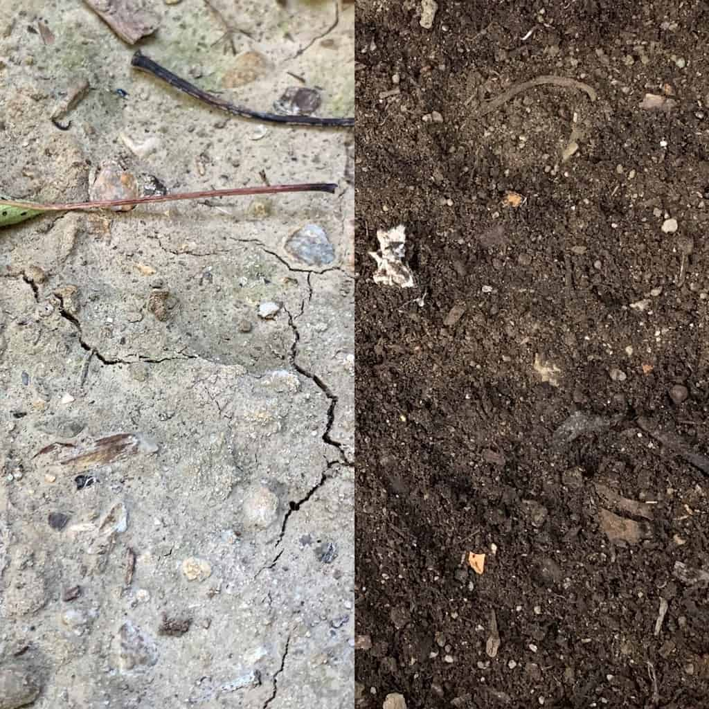 my clay soil before and after amending