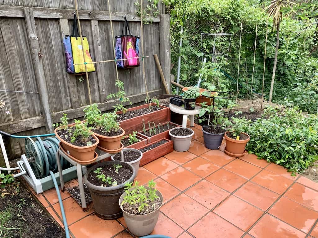 my backyard garden full of plants