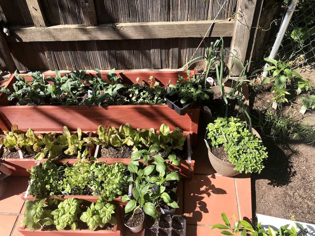 a small section of my backyard with a bunch of potted vegetables