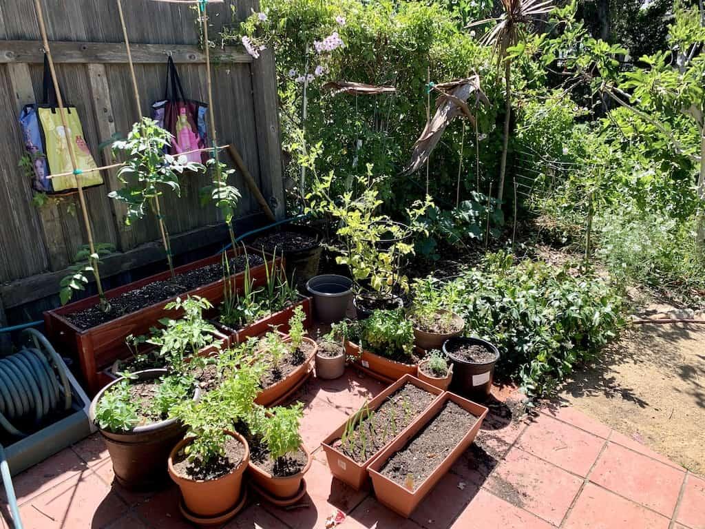my garden in my backyard homestead