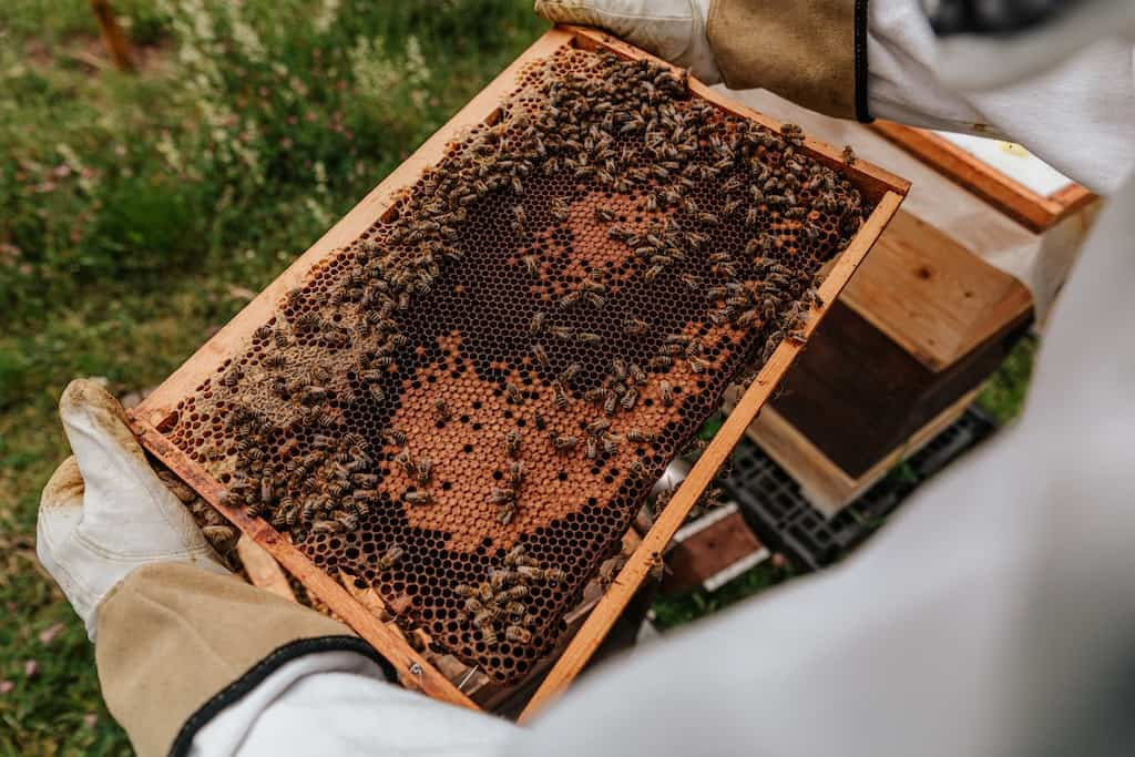 the inside of a beehive on a homestead