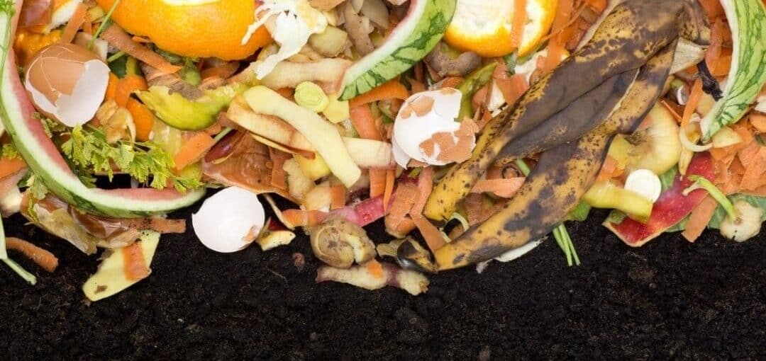 homemade fertilizer from food scraps