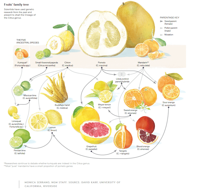 citrus pollination guide and ancestry