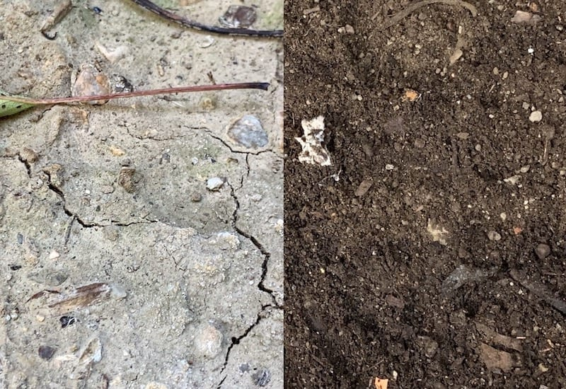 before and after amending clay soil in my parent's garden.