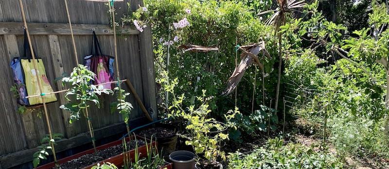tomato and cucumber bamboo trellises