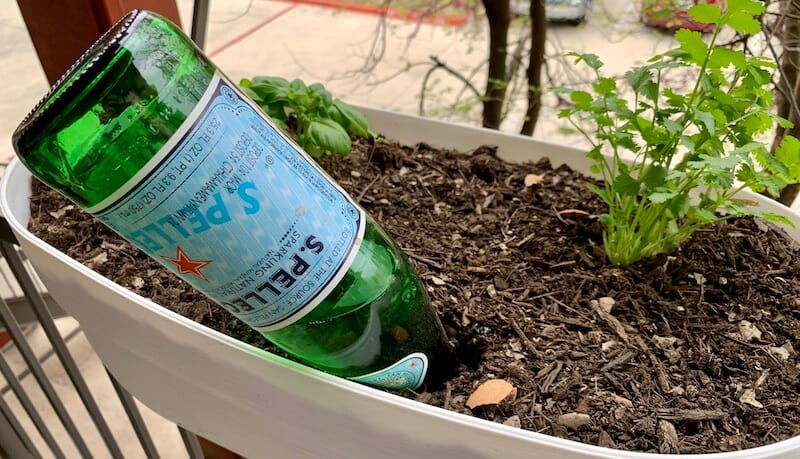 watering our plants with a water bottle