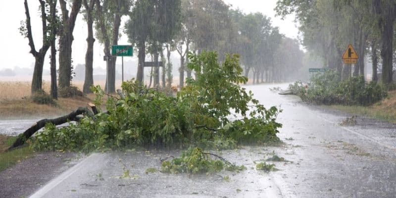 wind storm damage to a tree on a road