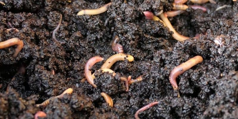 worms and worm castings