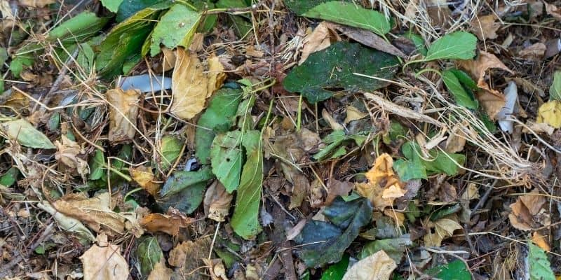 a mix of leaves in a compost pile