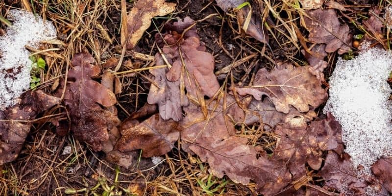brown leaves decomposing on the ground