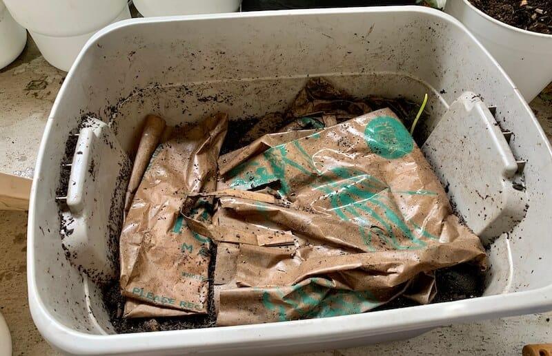 paper bags in my worm bin