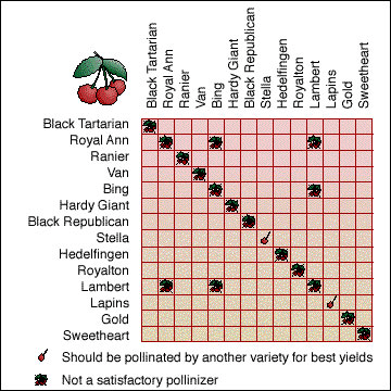 Cross-Pollination chart of sweet cherry trees, Source: University of Missouri