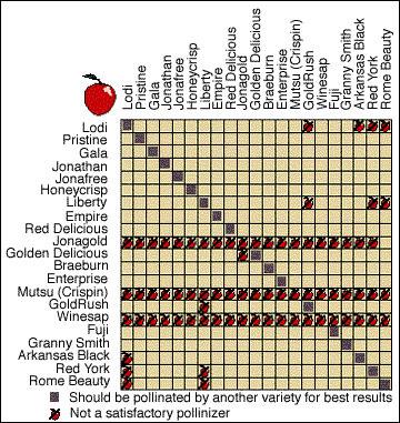 Cross-Pollination chart of apple trees, Source: University of Missouri