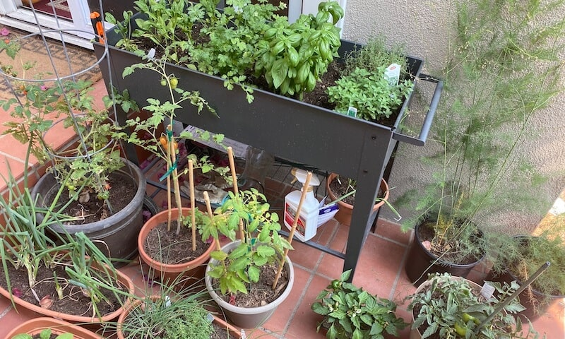 my moms garden and herb plants