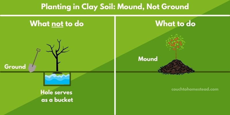 planting a tree in clay soil graphic