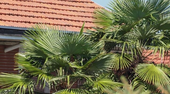 palm trees next to a house